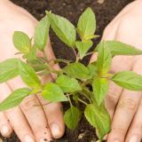 Натуральное органическое удобрение для растений из яичной скорлупы