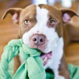 Простая игрушка для собаки своими руками